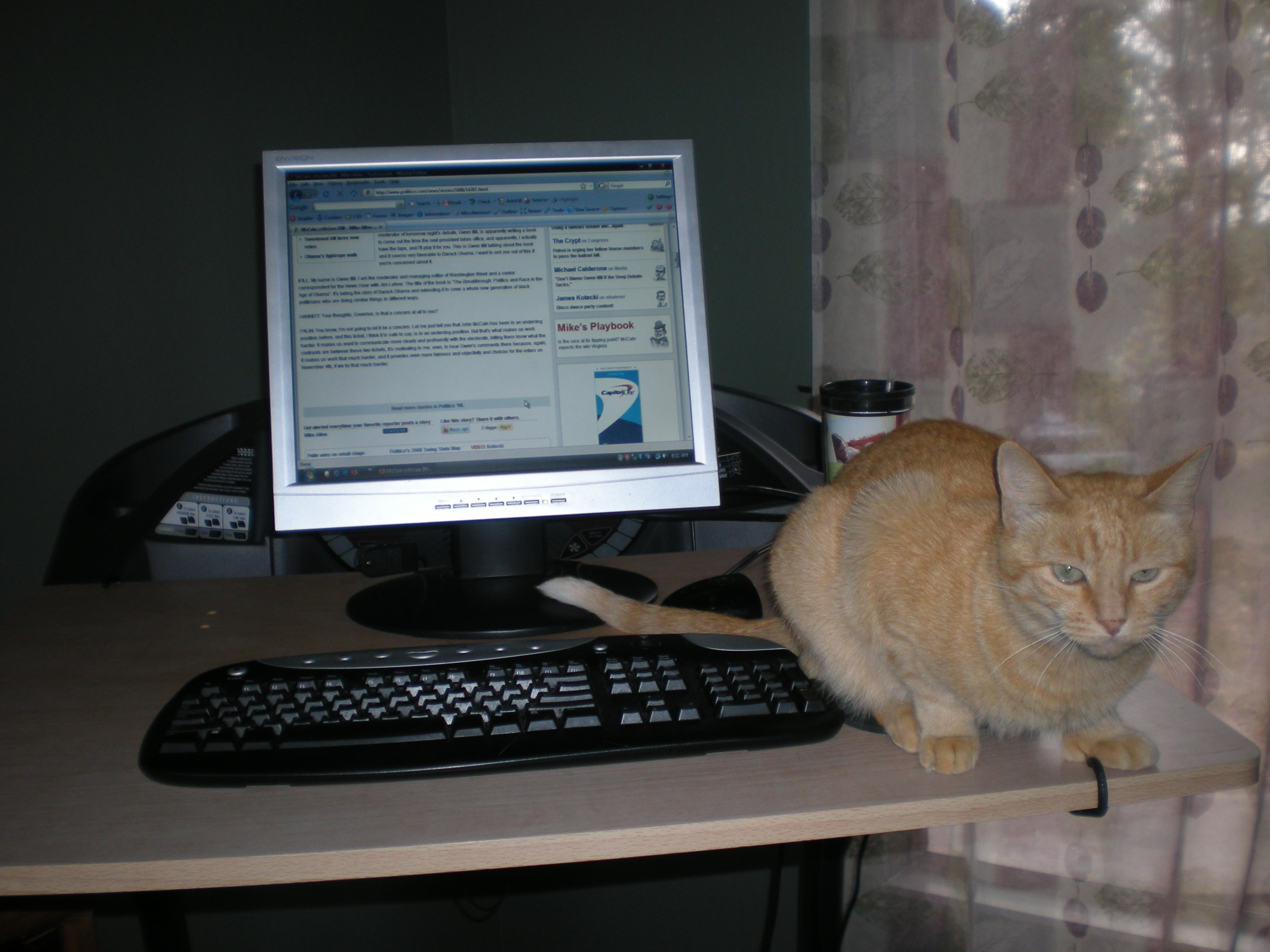 Cats like treadmill desks too!